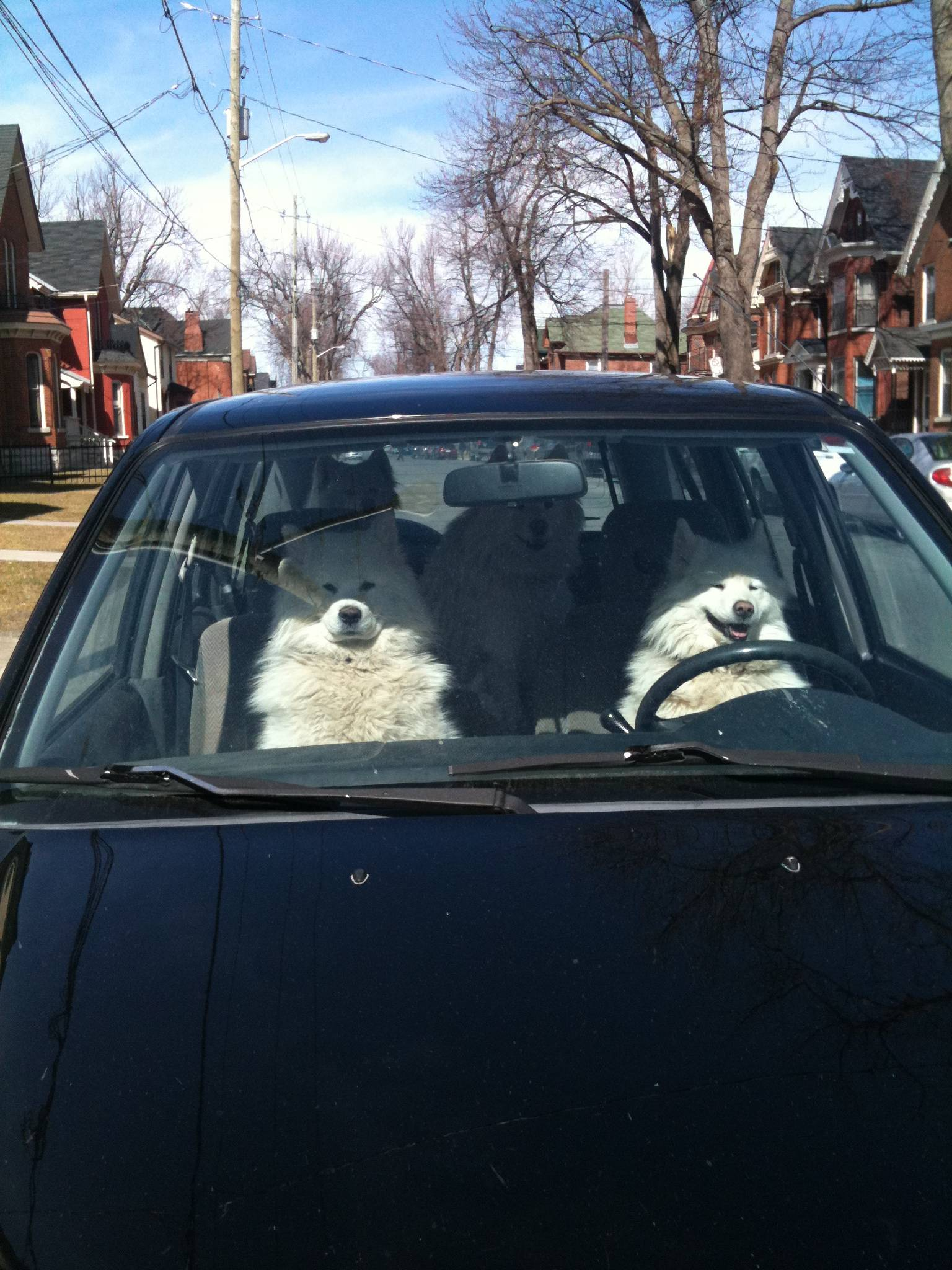 dogs on a roadtrip