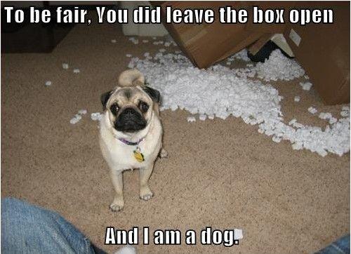 i am a dog - pichars.org