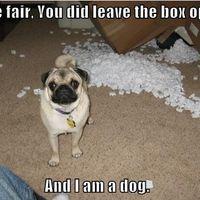 i am a dog