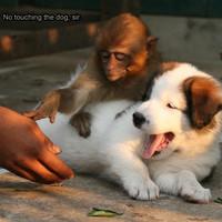 no touching the dog, sir