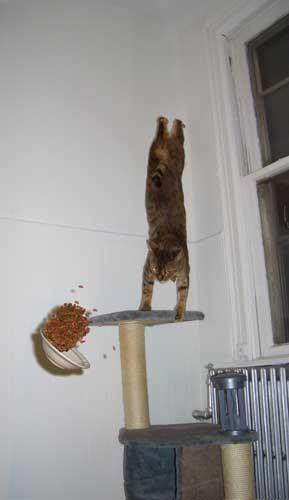 cat ninja - pichars.org
