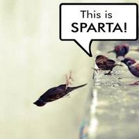 Madness? This is Sparta!