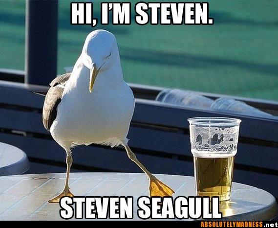 steven seagull - pichars.org