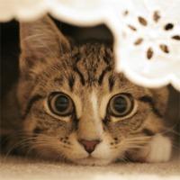 cat twitch