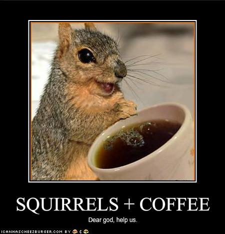 Squirrrr and coffee = ?