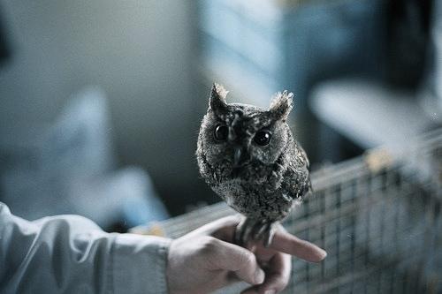 cute tiny owl - pichars.org