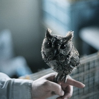 cute tiny owl