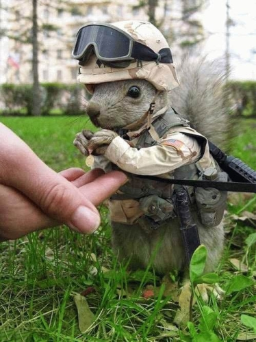 tactical squirrel - pichars.org