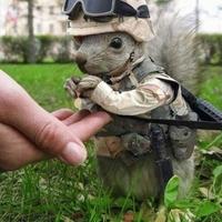 tactical squirrel