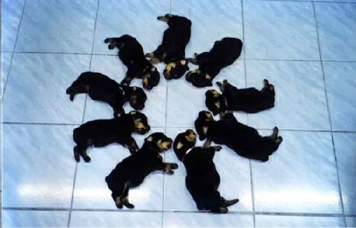 doggie circle