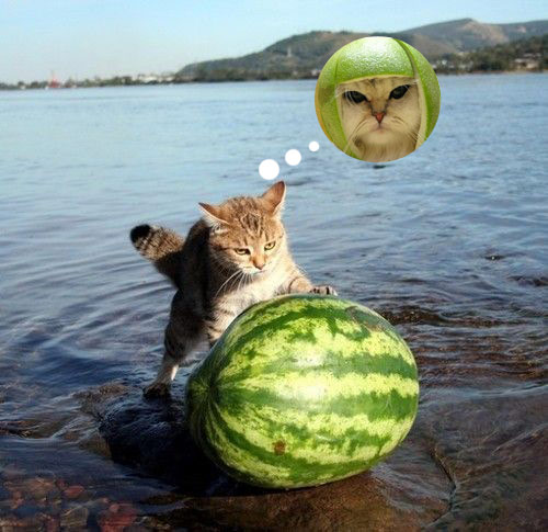meloncat in progress - pichars.org