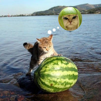 meloncat in progress