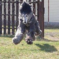 fur monster