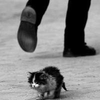 kitteh will survive