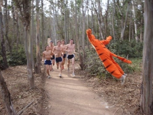 THE WONDERFUL THING ABOUT TIGGERS IS TIGGERS WILL FUCK UP YOUR MORNING JOG - pichars.org