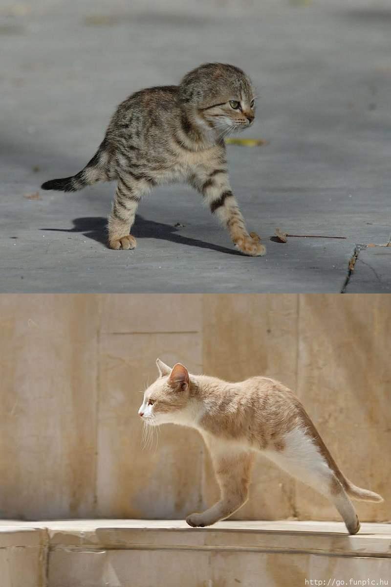ninja cats - pichars.org