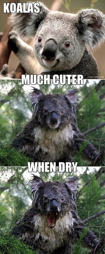 cuter when dry - pichars.org