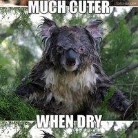 cuter when dry
