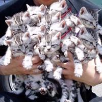 2 many kittenz