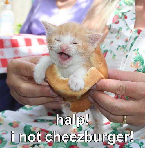 halp I not cheezburger