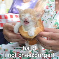 halp I not cheezburger