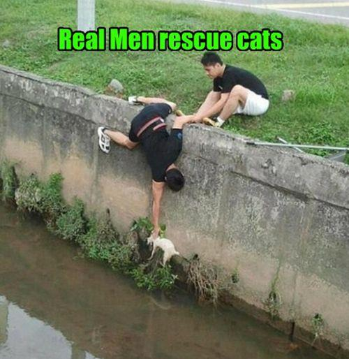 Real men rescue cats - pichars.org