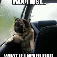 Dog pondering