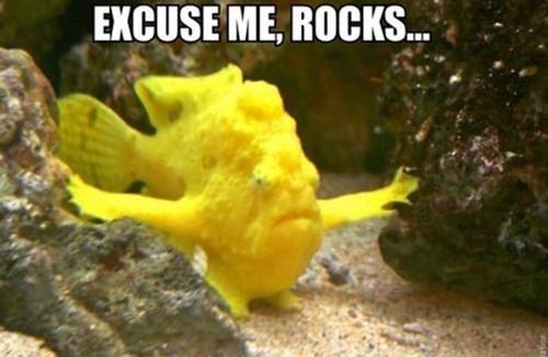 Excuse me, rocks - pichars.org
