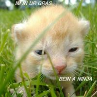 in ur grass bein a ninja
