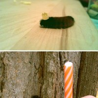 caterpillar birthday