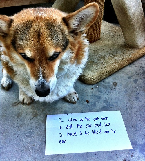Dog shaming - pichars.org