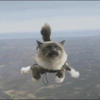 skydiving kittay
