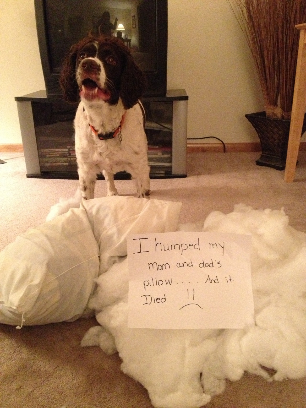 Dog shaming - pichars.org