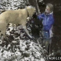 Leap dog
