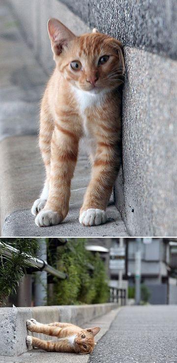 sidewayscat