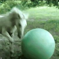 Horse + Ball = Fall