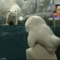 Never play with a Polar Bear