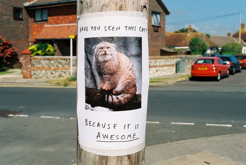 have you seen this cat - pichars.org