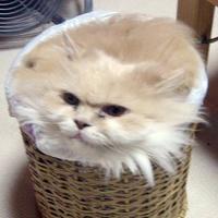 basket cat - pichars.org