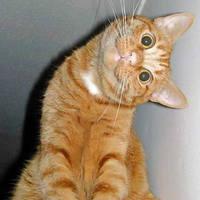 sidewayz cat